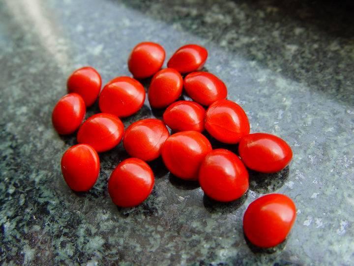 红豆相思为哪般 - 心雨轩 - 心雨轩