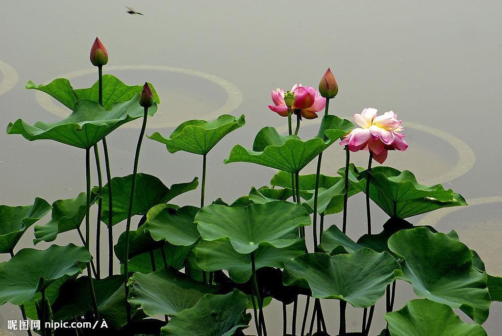 (原创)七绝《四季花》 - 山竹 - 山竹的博客