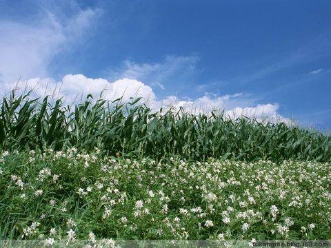 引用 农田里的诱惑 - 荷花淀 - 荷花淀
