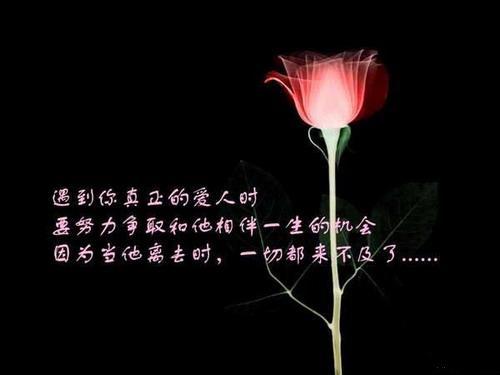 精美圖文欣賞14 - 唐老鴨(kenltx) - 唐老鴨(kenltx)的博客