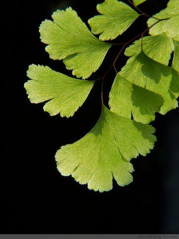 室內逆光和自然逆光-----蕨 - 随风而去 - 大静则成虚 虚无则成静 化大静而成大美