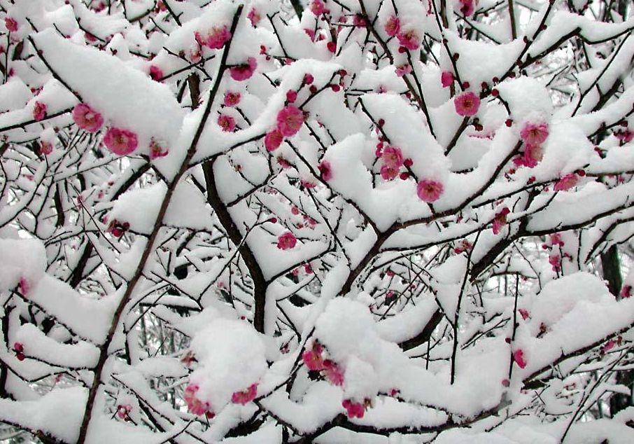 冰雨迎春 - 靓剑 - 靓剑 的博客