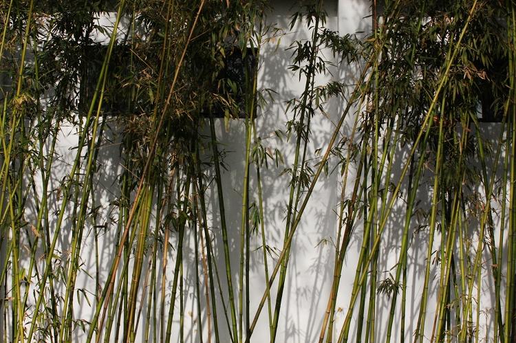 (原创摄影)公园的墙 - 刘炜大老虎 - liuwei77997的博客