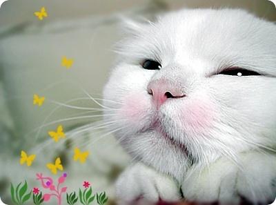 【原创】一只猫 - 小熊 - 悦妍  小熊