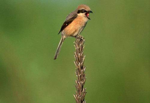 肩膀上的小鸟 - 老何东 - 何东老邪