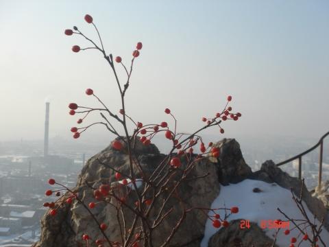 [原创68]雪后帽盔 - 飞舟 - 飞舟
