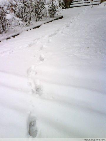 2008年的那场大雪 - 无疆 - 无疆的世界