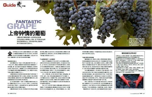 0810-上帝钟情的葡萄酒 - 新探索 - 新探索QUO杂志