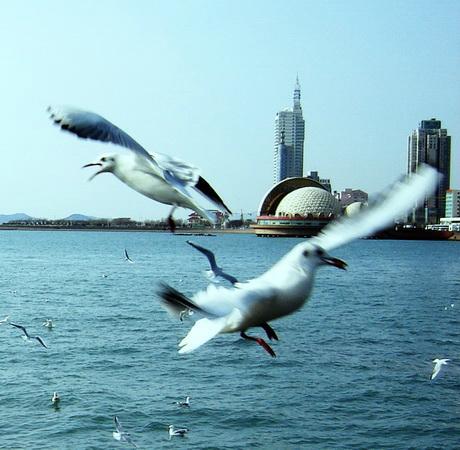 【原创】海之子 - 南湖过客 - sijia1129的博客