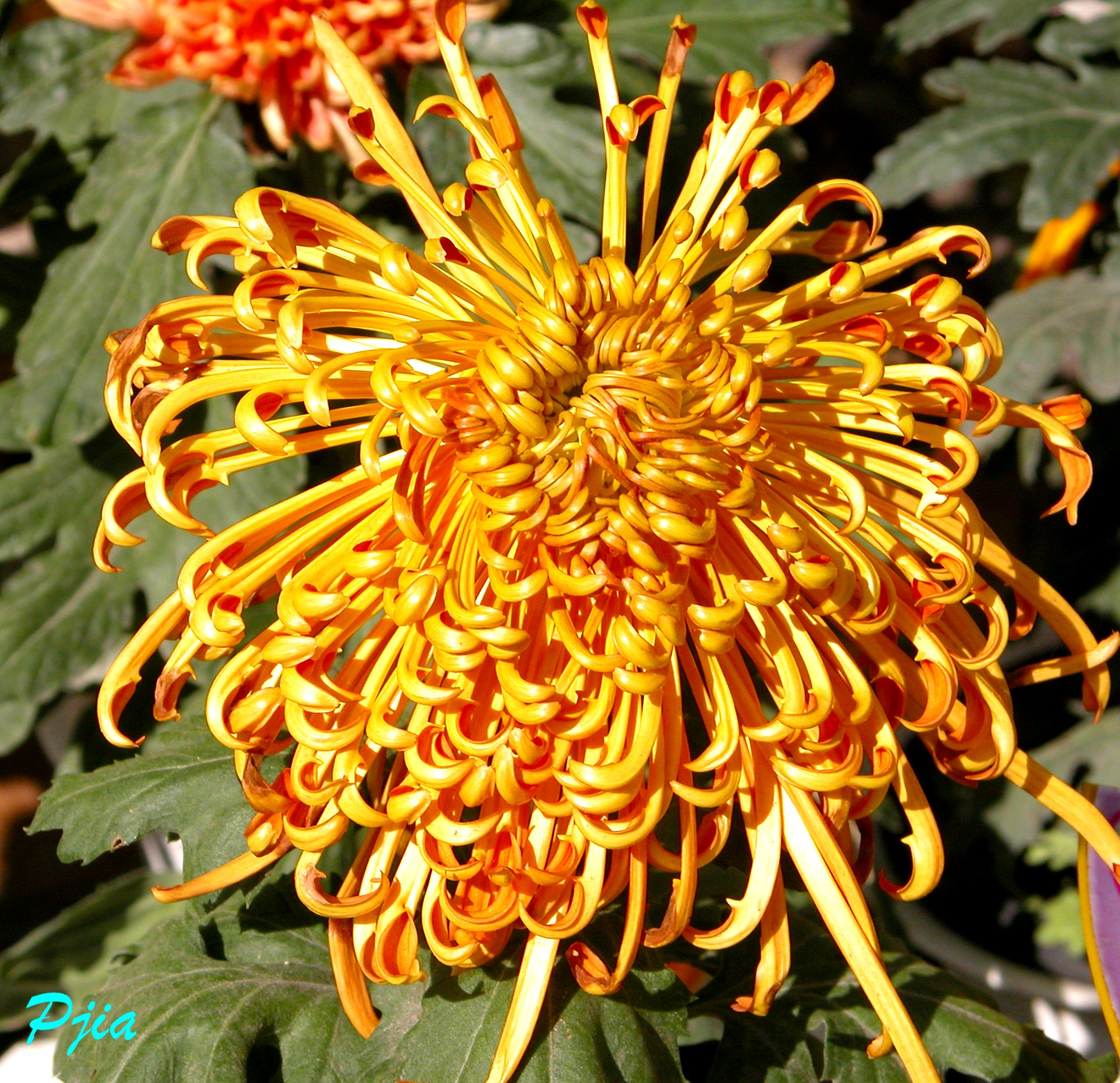 花卉 - 云游老道  - 崂山隐士的茅庐