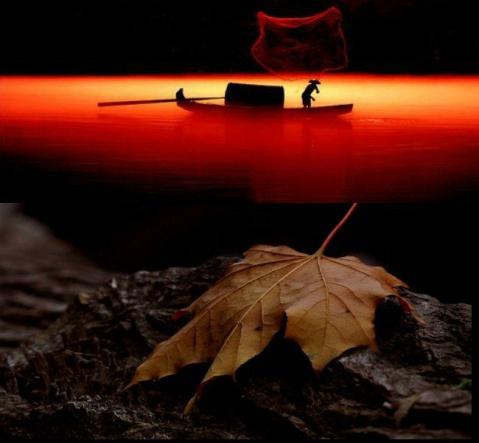 灿烂晚霞 - 灿烂晚霞欢迎朋友制作~金色的秋天(组图) - 灿烂晚霞 - 灿烂晚霞欢迎朋友欢迎朋友