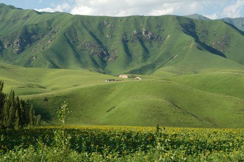 新疆-那拉提 - 西樱 - 走马观景