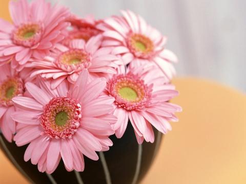 春风化雨 美菊生香 【花卉欣赏】 - 美女-何乐不为 - 学习、娱乐、开心你我她!