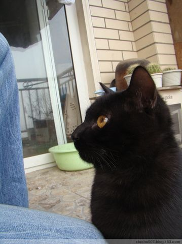 小黑猫长大了 - 小狐505 - 风为裳的博客