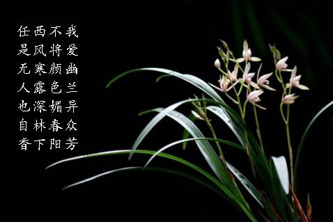 幽兰逢春  (原) - gyljmy - gyljmy的博客