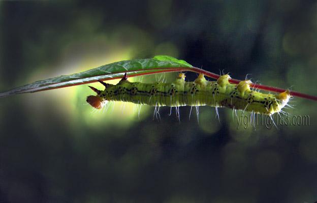 (原创)昆 虫 - 高山长风 - 亚夫旅游摄影博客