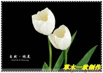 博客页面3 - wjq-597 - 静远堂  JING YUAN TANG