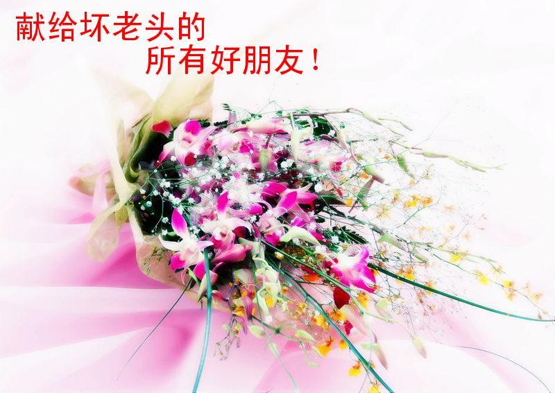 鲜花送给你 - 坏老头 - hlt50的博客