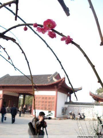 赏梅 - chuncang - chuncan的博客欢迎你!