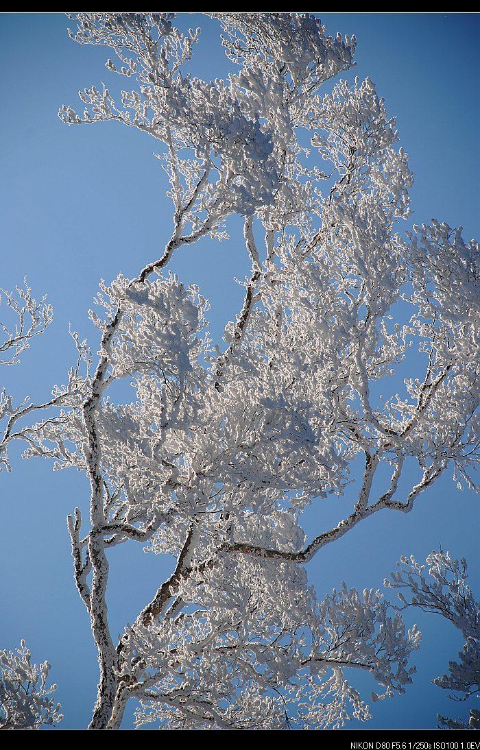 雪乡美丽的树挂 - 海阔山遥 - .