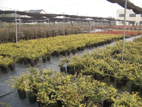 组织参观国美容器苗繁育基地 - 清扬 - 花果飘香