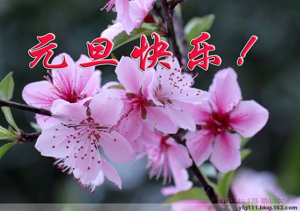 诗歌报贺新春——2008年元月份斑竹名单! - 橄榄梦 - 橄榄梦文学