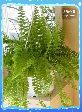 18种常见室内植物-居家必备 - FOB.深圳 - FOB深圳