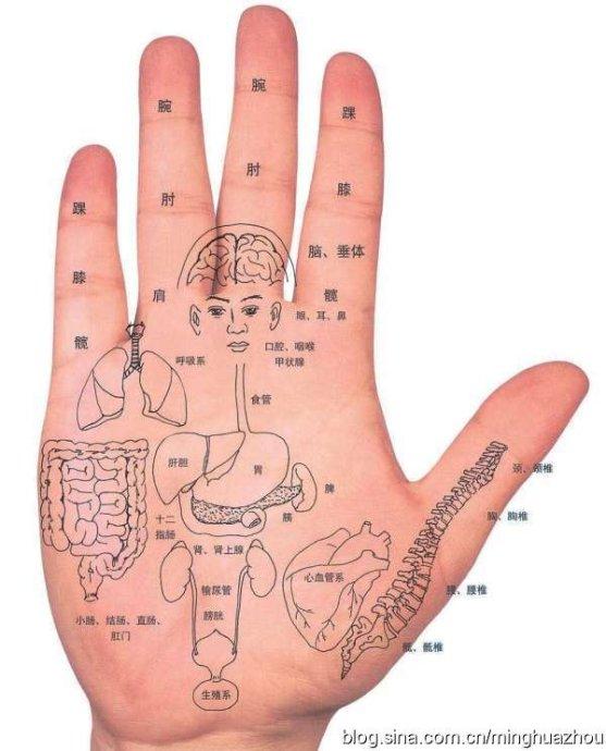 手诊、面诊----人体全息图 - 周明华 - 真正的健康  真正的财富