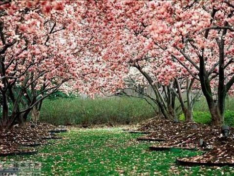 心的方向 (原创) - 梦景红花 - 梦景红花的博客