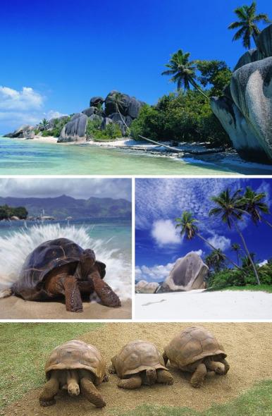 塞舌尔的阿尔达布拉岛