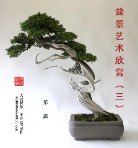 盆景艺术欣赏 - 何足道哉 - hklz5299 的博客