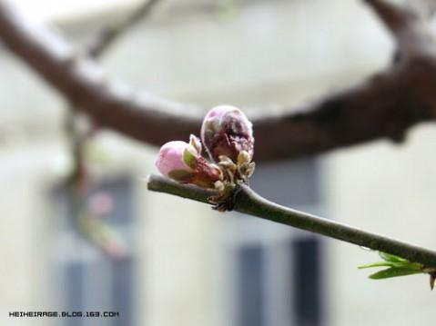 窗台上的桃花结了个小苞 - 崇 - HEIHEIRAGE≠PANST