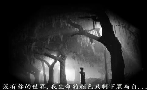 守候,伤感而美丽。。。(转) - 雁月菊蚕 - 流泪的风......