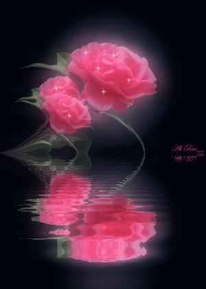 红玫瑰 - 汤洪高 - 汤洪高个人主页