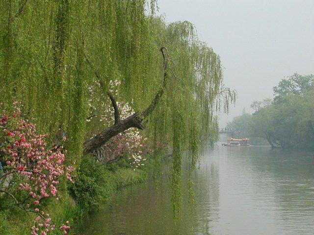 春的声音/和素雅清香 - 一掬茗香 - 一掬茗香的博客