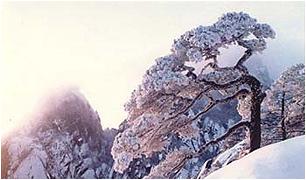 2009年2月17日 - jlZYHUWEI - 长白山的博客