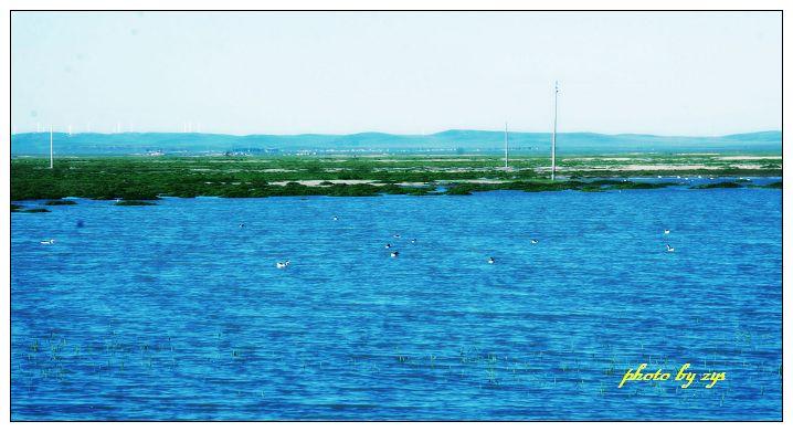 迷途达里诺尔湖[原] - 自由诗 - 图说天下