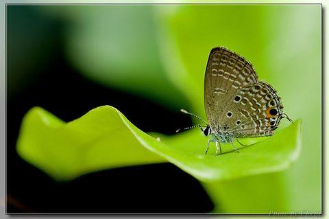 美丽小生灵 - Cheni - Cheni的蝴蝶馆