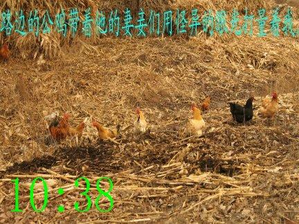暴走时拍的照片 - 无公害老玉米 - 无公害老玉米的博客