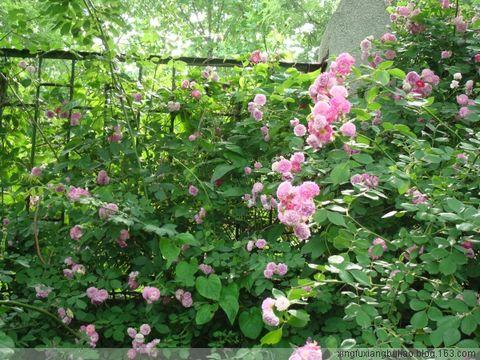单位的花园 - 开心 - 开心的博客