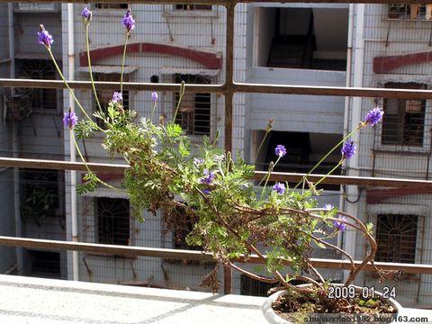 印象2009 之 小家暖阳 - 易江南 - 纪念,为了遗忘