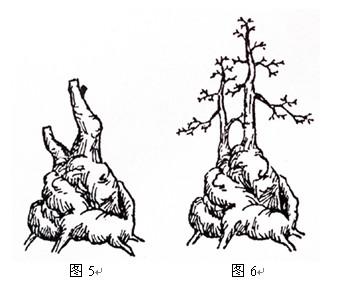 手绘花盆树图案