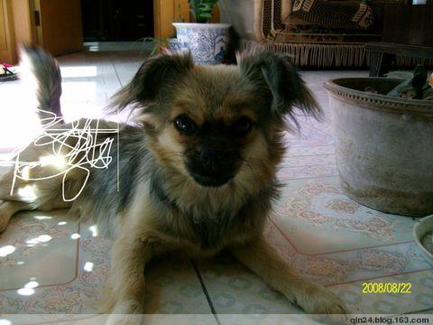 我家的宠物 - qin24 - 秦力先生的博客
