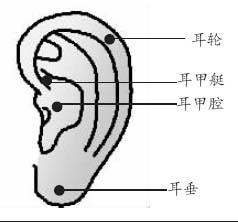 耳朵变化对应内脏健康 - 小娜 - mln1006的博客