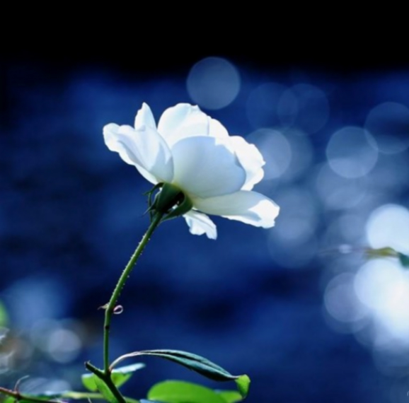 人的善良来自干净的心底.......shy; - 香香天使 - 深圳/香香天使网易博客
