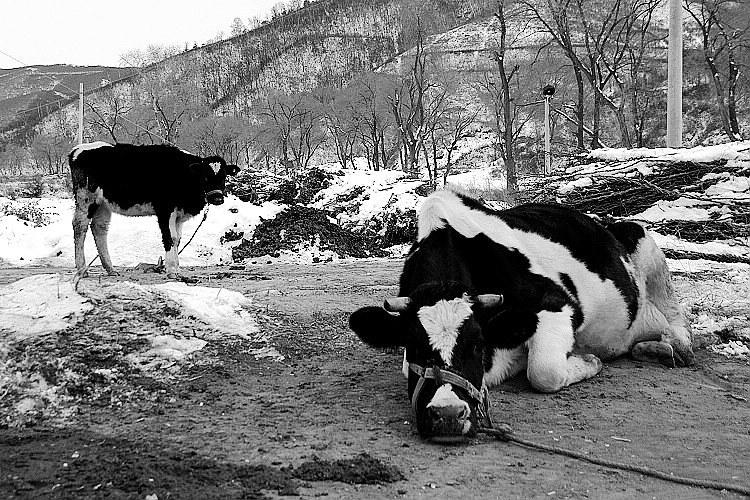 雪中即景 - 牧羊女 - 牧羊女的羊圈