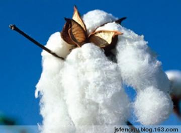 那氏778诱导剂对棉花进行浸种处理的试验报告 - 江苏省丰谷种业有限公司 - 江苏省丰谷种业有限公司