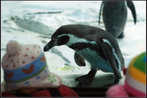 动物园最后的冬天 - 贝贝的爸妈 - 贝贝的爸妈