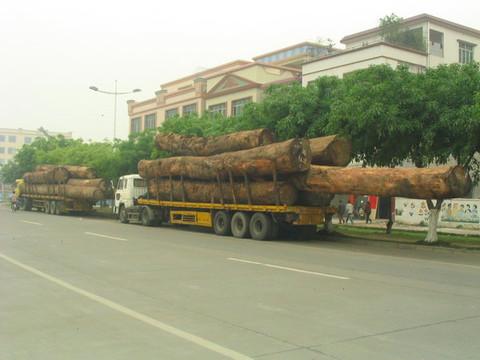 人类什么时候才停止对森林残害? - lq - LQ的博客