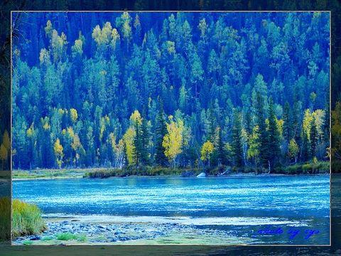 [原创]梦幻西域(11)喀纳斯神仙湾《黄叶吟》 - 自由诗 - 人文历史自然 诗词曲赋杂谈